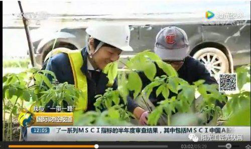 """CCTV2《我与""""一带一路""""》:30MW ,日本最大""""农光互补""""光伏电站中国造 !当地农民增收10倍 !"""