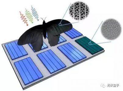 受蝴蝶启发的光伏技术可将光吸收率提高多达200%