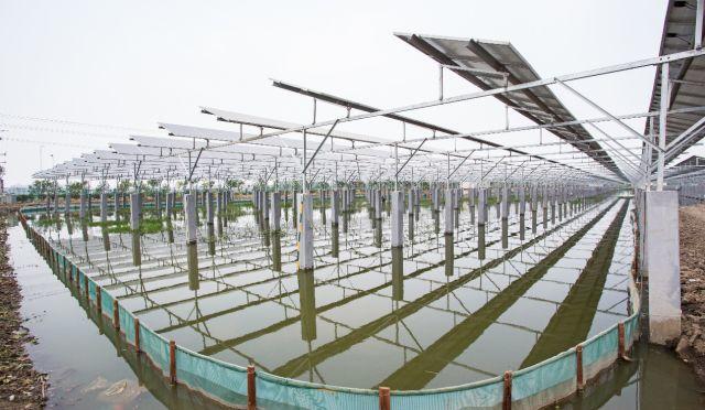 新兴蓝海下,看创新光伏农场模式如何助力精准脱贫?