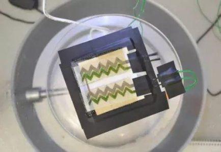 光伏应用又填新革新,蓝绿藻也能制成太阳能电池板?